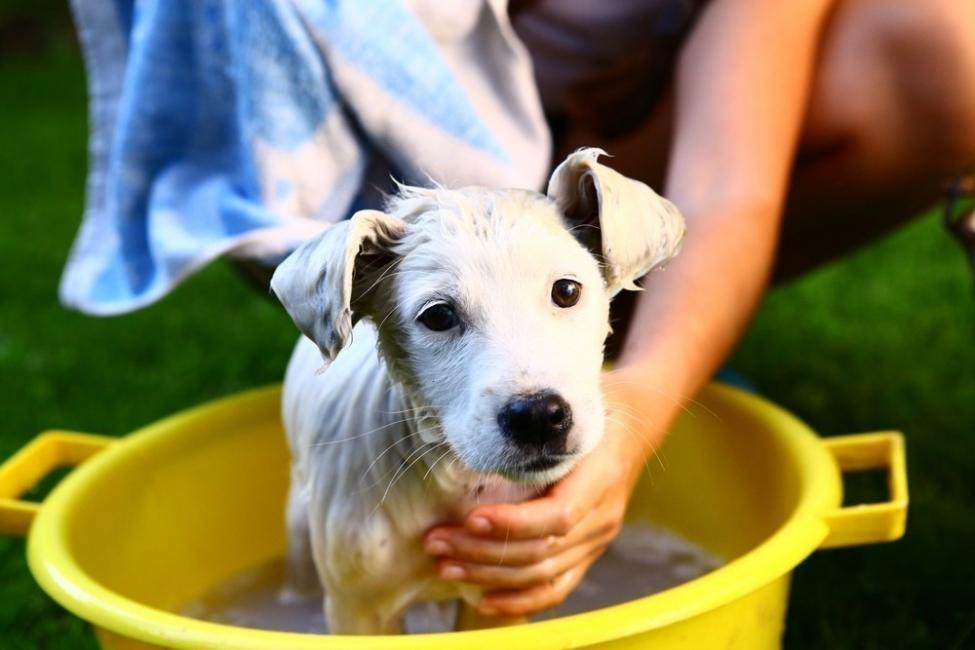 holanda- sin perros abandonados