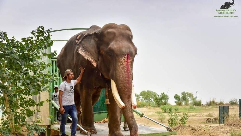 elefante gajraj
