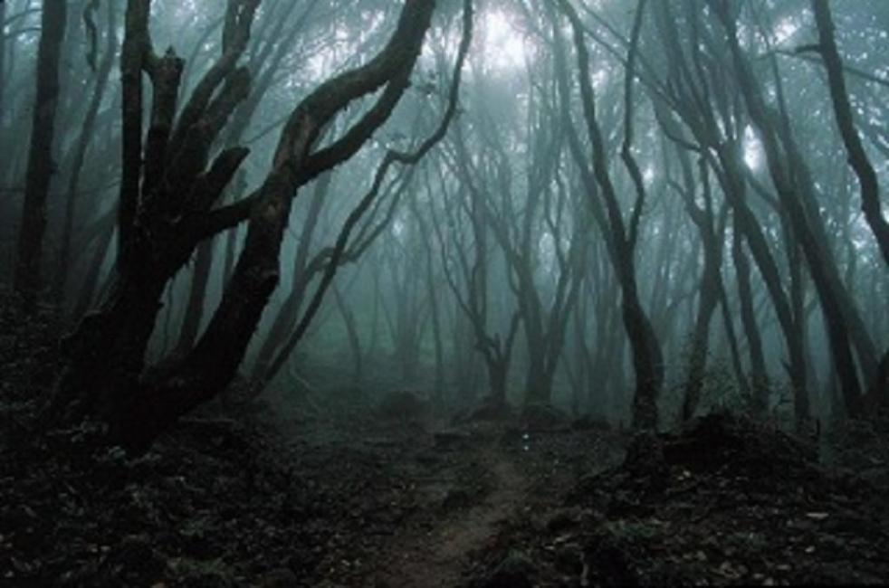 bosques maduros