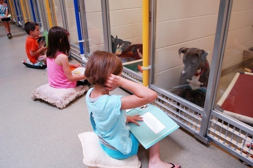 Niños leen cuentos a perros