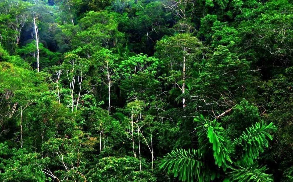 Costa Rica prohíbe la caza deportiva - costa rica