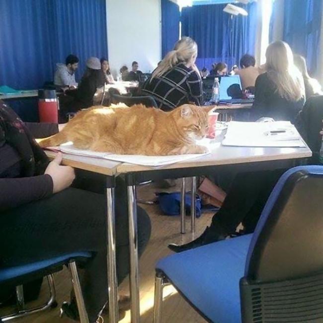 gato en universidad en alemania