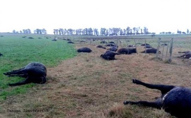 vacas muertas por agroquimicos