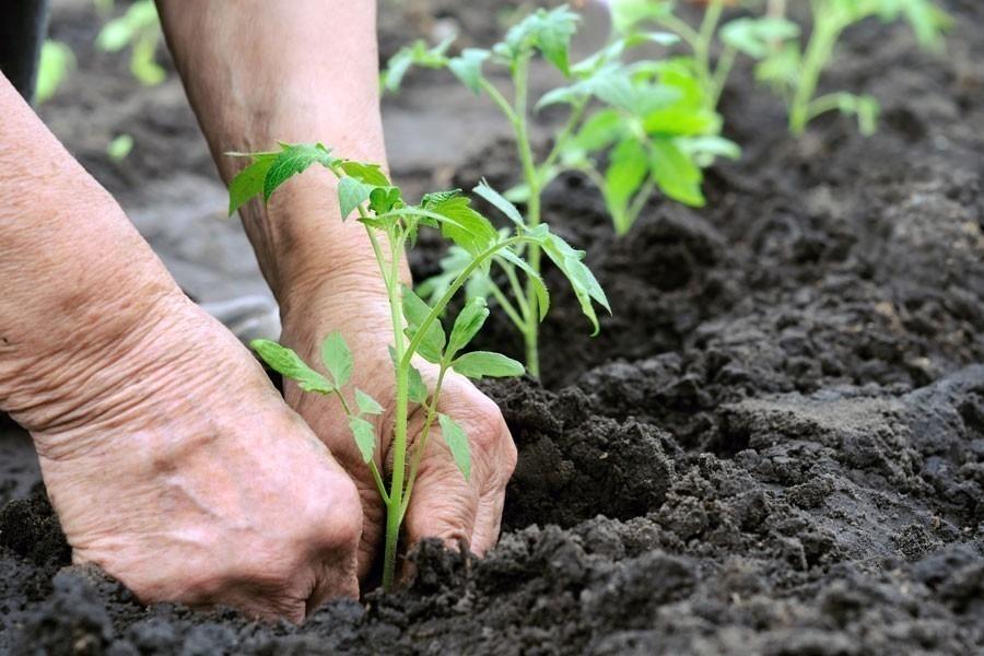 truco raíces plantas