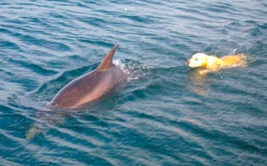 Ben-the-Dog-and-Duggie-the-Dolphin-1