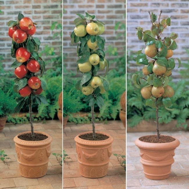 frutales en columnas