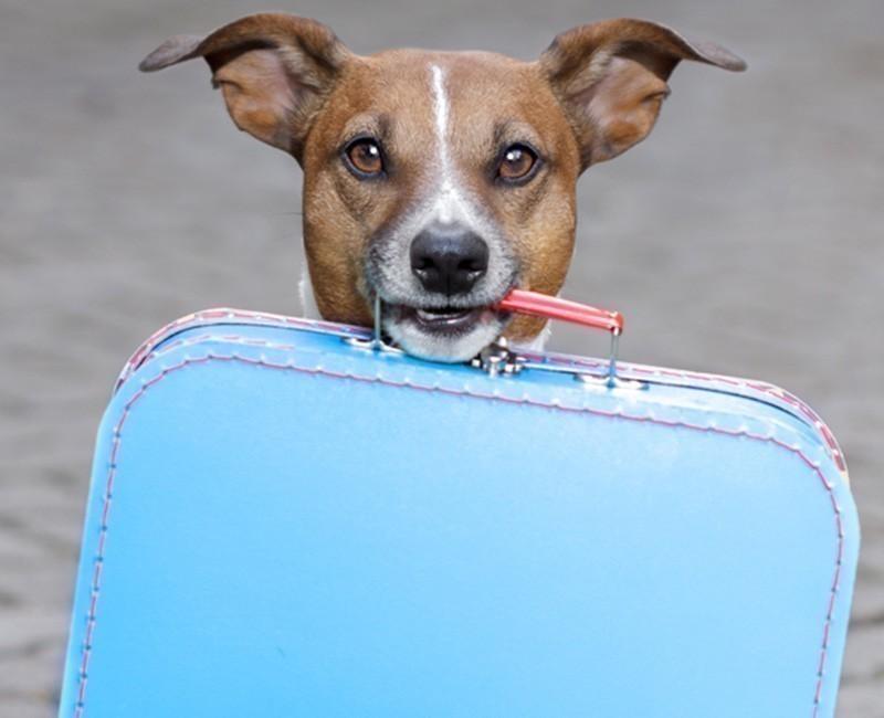 Los perros podrán viajar en metro en Madrid- noticia