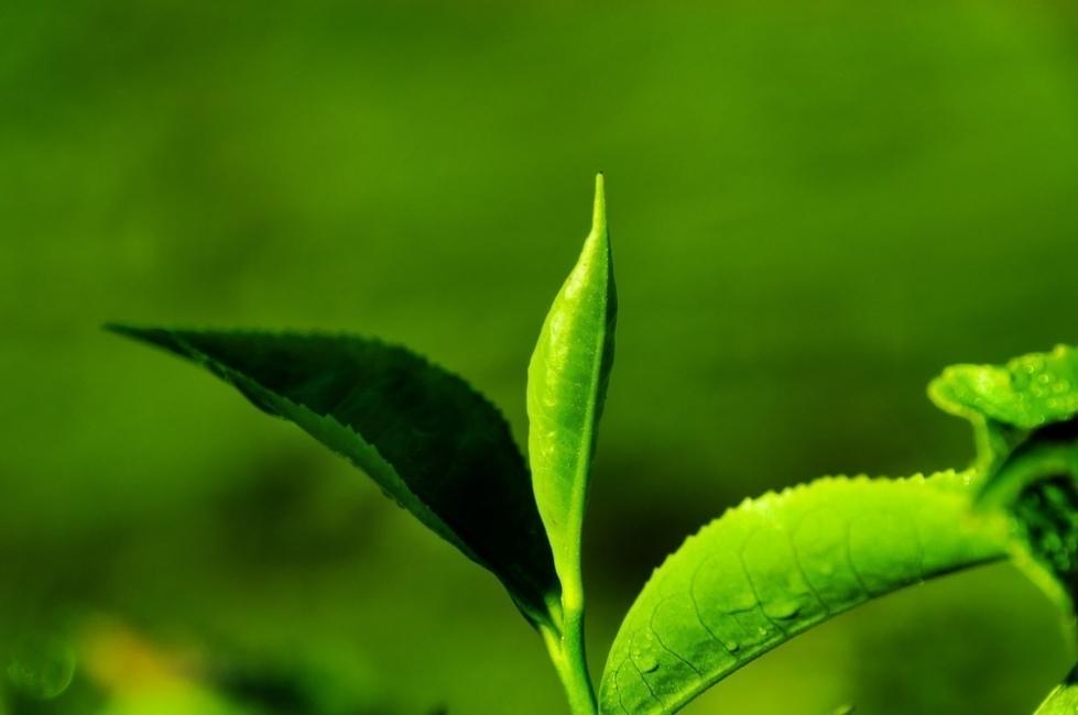comunicación de las plantas