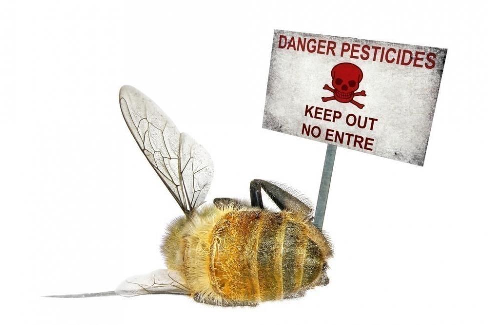 salvemos a las abejas- evita quimicos