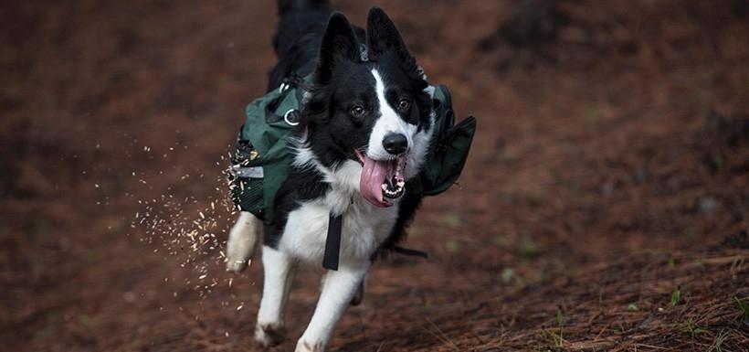 perros reforestadores
