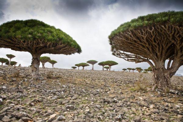 Dragos, en Yemen