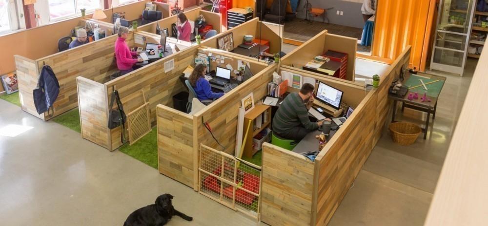 empresa kurgo- oficinas aptas para mascotas