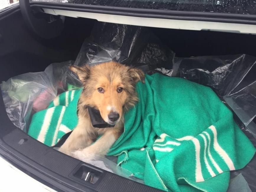 perra en rusia