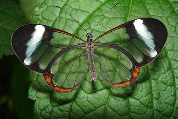 mariposa-espejito3