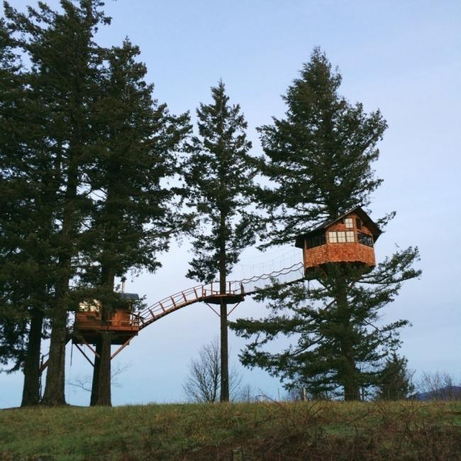 Un grupo de amigos construyó su propia casa del árbol en medio de un paraíso natural - Foster Huntington