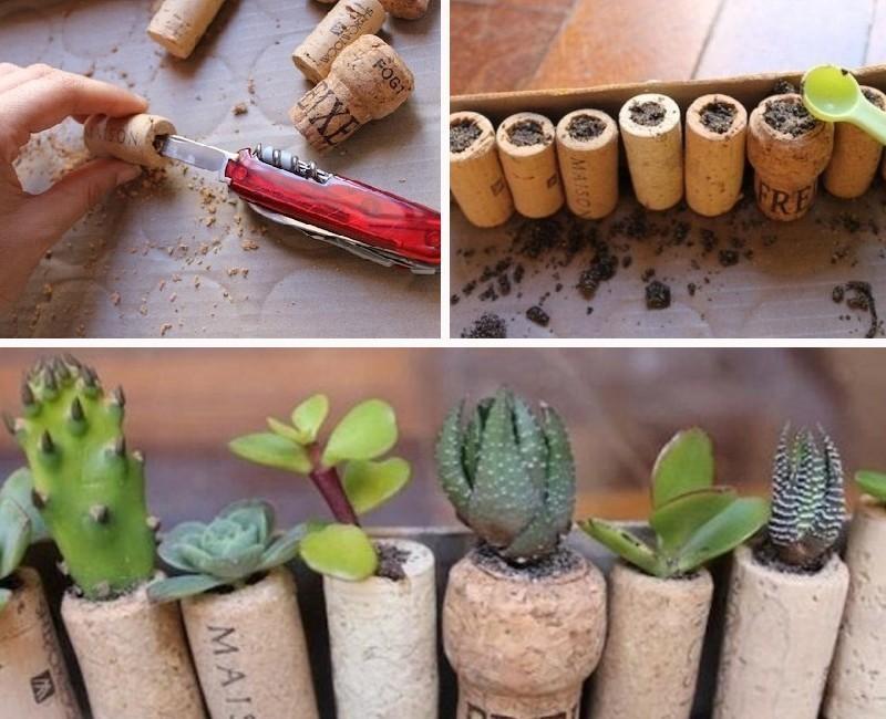 paso a paso- plantar suculentas en corchos