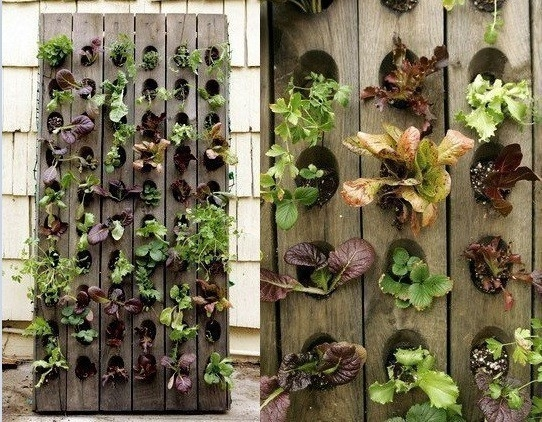 jardín vertical - maderas