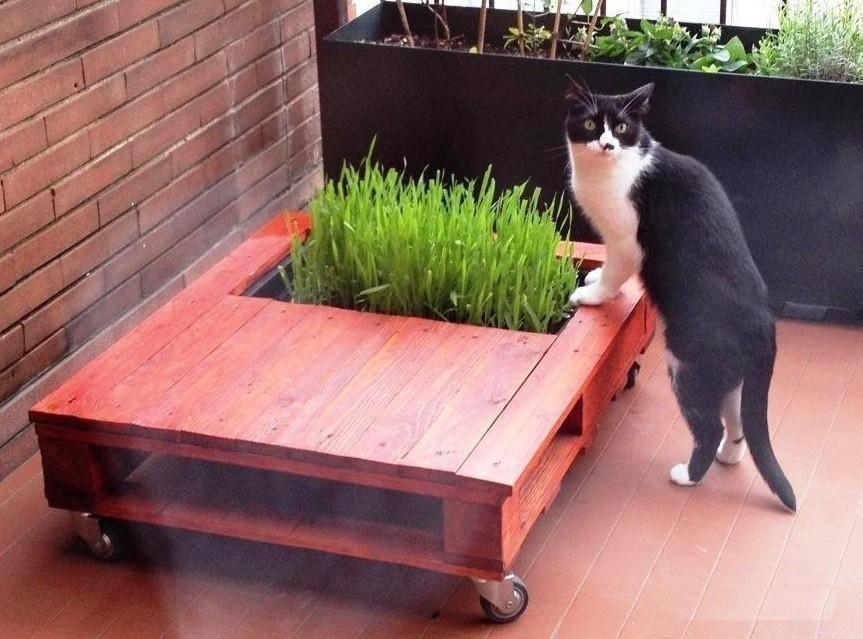 mesa de palet - hierba gatuna