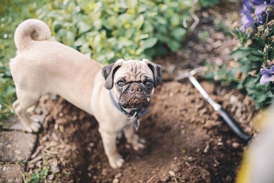 evitar que tu mascota destroce tu jardin