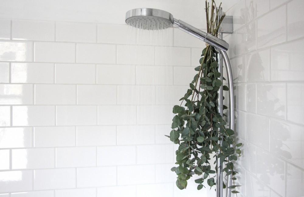 ducha relajante - eucalipto