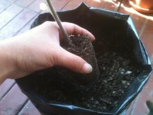 16 - Colocar la planta el el espacio al centro de la maceta...