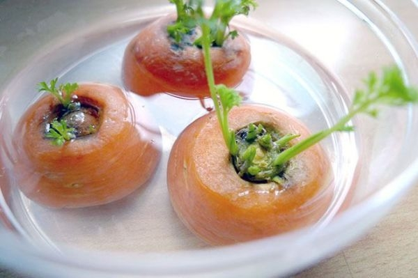 regrow-carrots