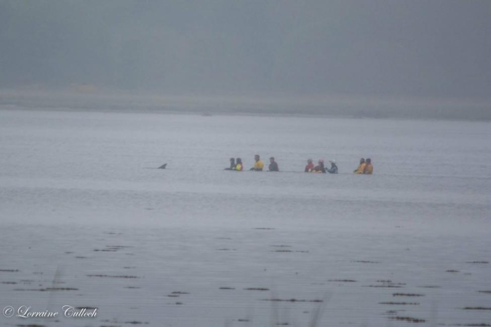 mujer salvó a un delfin por un mal cálculo del gps