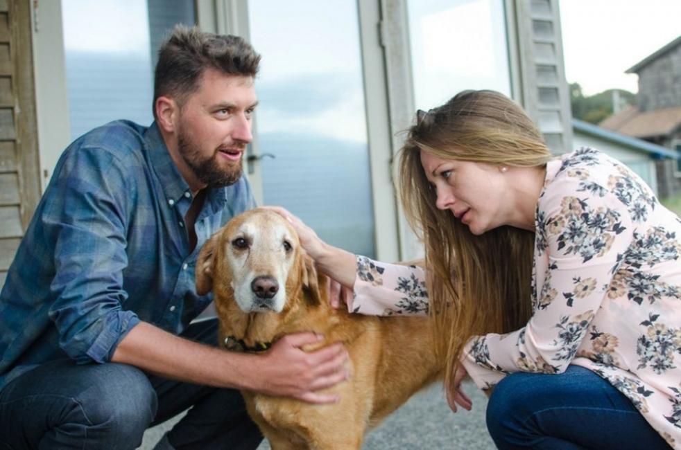 Dood perro con cáncer- historia