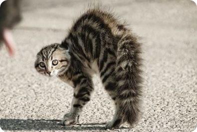 Como-identificar-a-un-gato-molesto