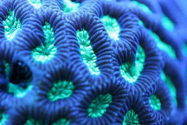 Macro-Shots-of-Underwater-Corals-5-600x400