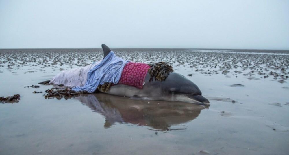 mujer salva delfín