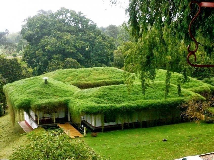 techos verdes ventajas