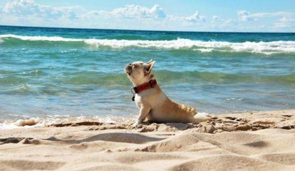11-Adorable-Animals-Doing-Yoga-Poses-733x425