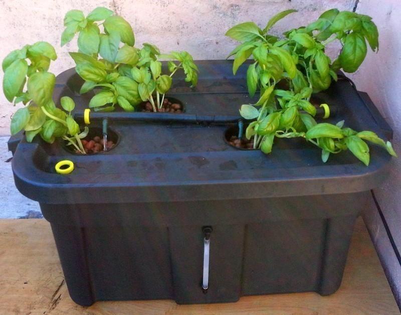 Cómo hacer un mini cultivo hidropónico en tu hogar