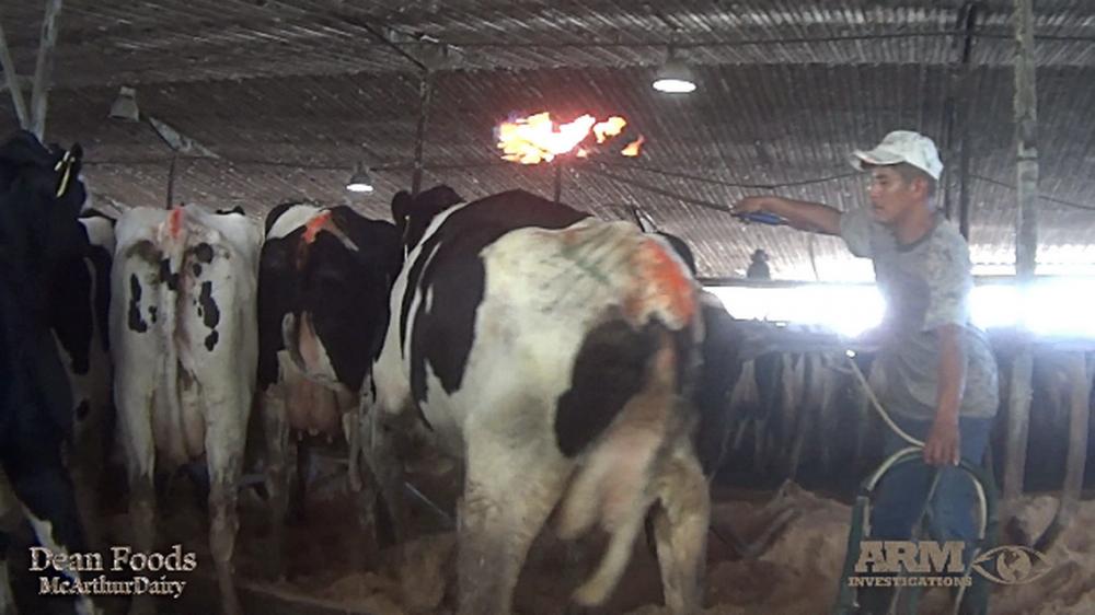 La ONG Animal Recovery difundió el vídeo