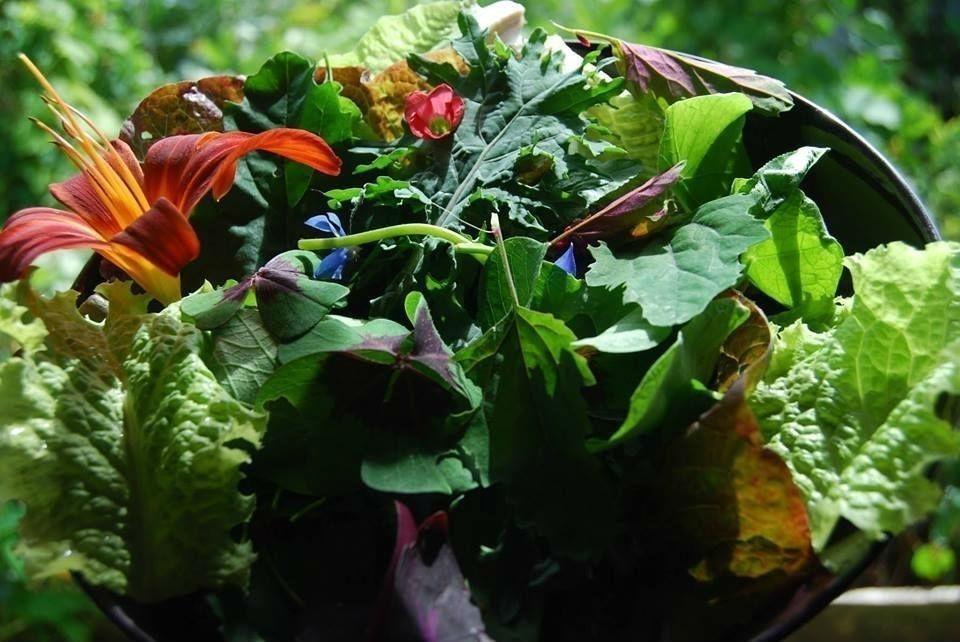 jardín comestible- diy