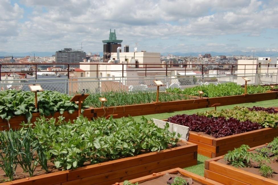 jardín comestible- terraza