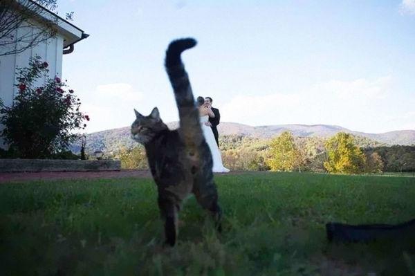 animales-photobomb-divertido-17
