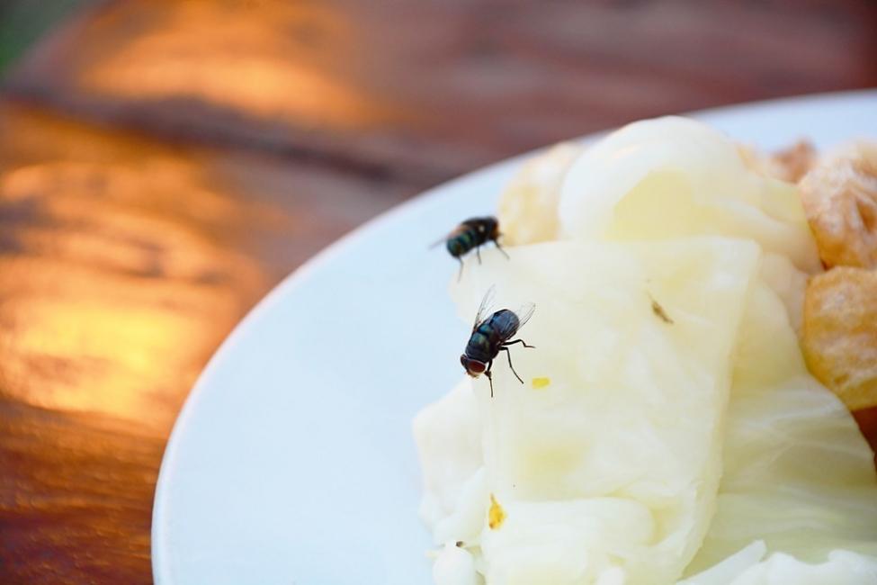 Las moscas en la comida pueden causar graves enfermedades
