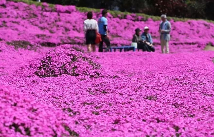 hombre plantó flores para su regalarle a su esposa ciega