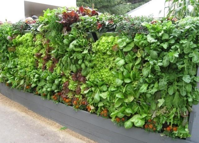 jardín vertical - ensalada
