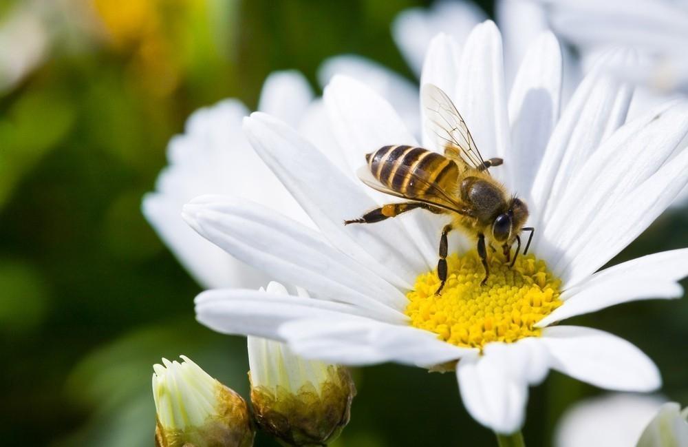 abeja - abejas robóticas capaces de polinizar