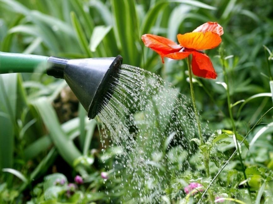 agua oxigenada jardin -raices