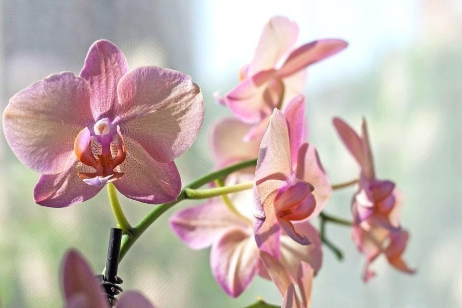 orquídeas en el hogar