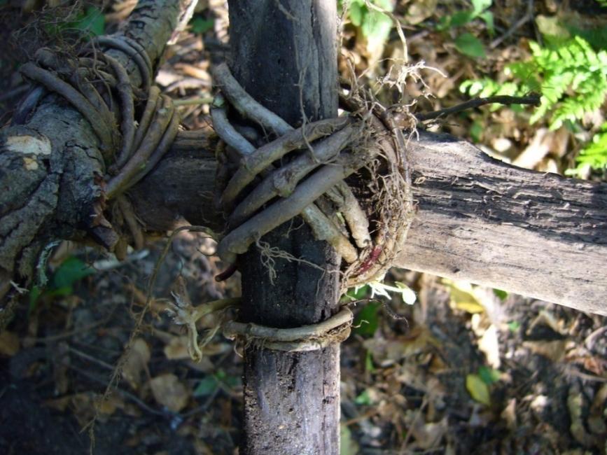 nudos y amarres para construcciones - amarre diagonal