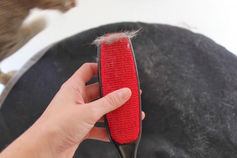cepillo pelos mascota