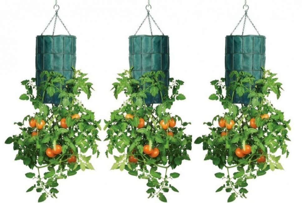tomates invertidos