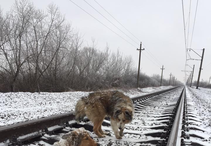 perrito salva a perrita en rusia