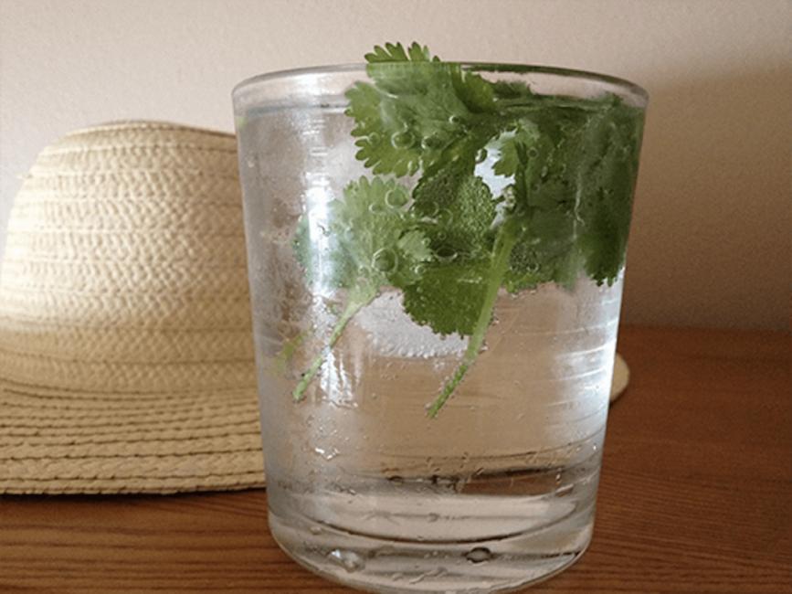 cilantro -Esta hierba es bioabsorbente y purificadora del agua