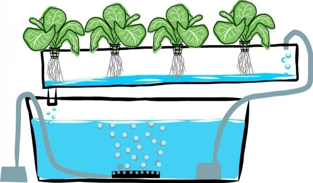Cómo hacer un mini cultivo hidropónico en tu hogar - paso a paso